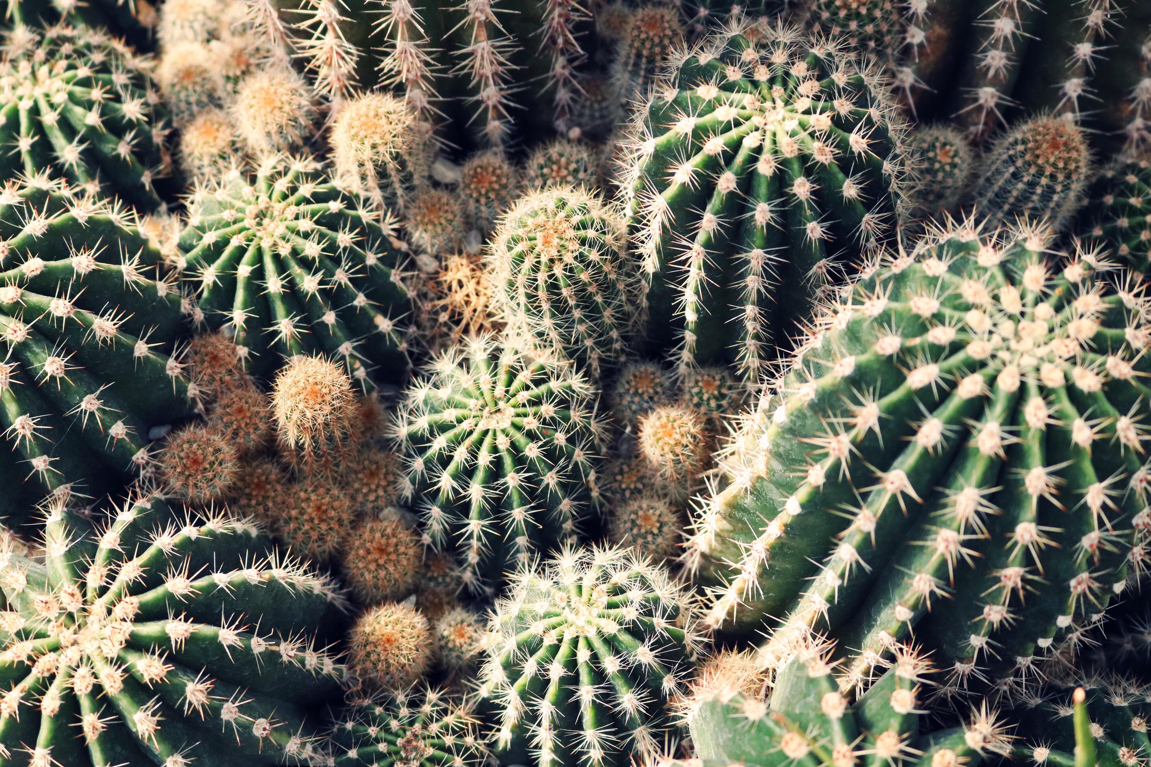 Desert Landscape Wallpaper Hd Cactus Plants Under The Starry Sky 183 Free Stock Photo