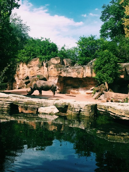 Photography of Rhinoceros Near Body of Water