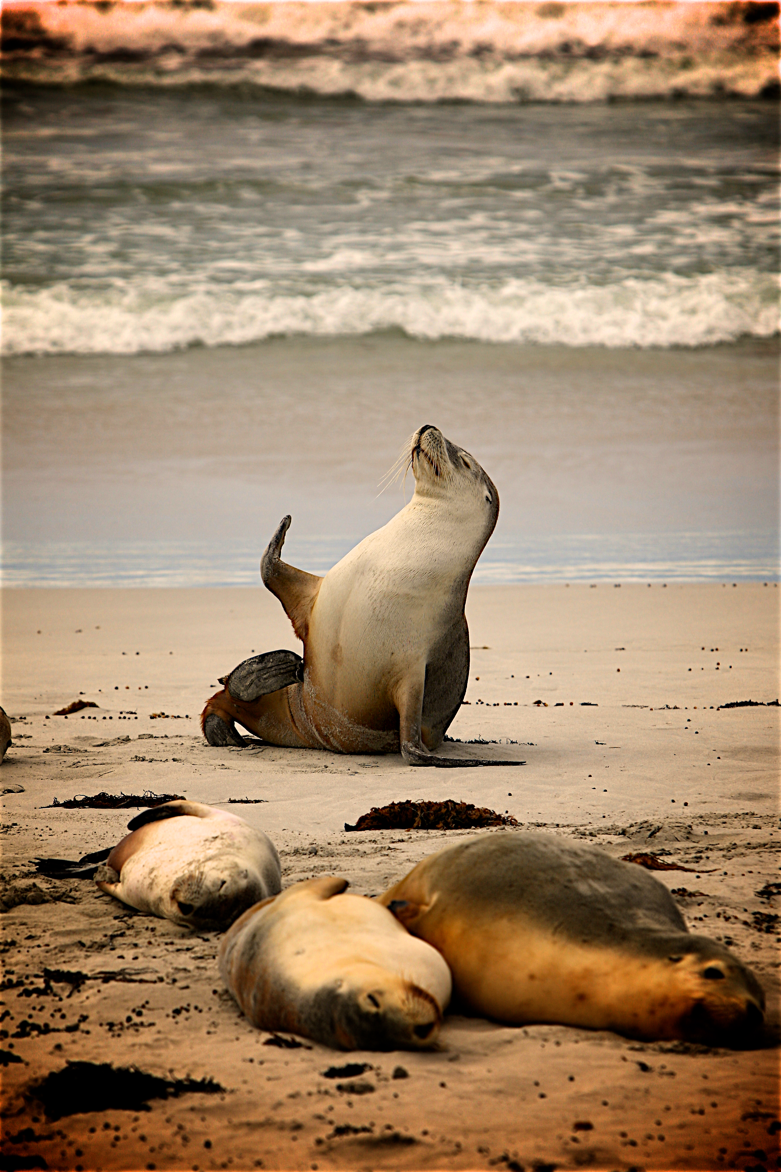 Cute Animal Wallpapers Free Download Close Up Of Sea Lion At Beach 183 Free Stock Photo