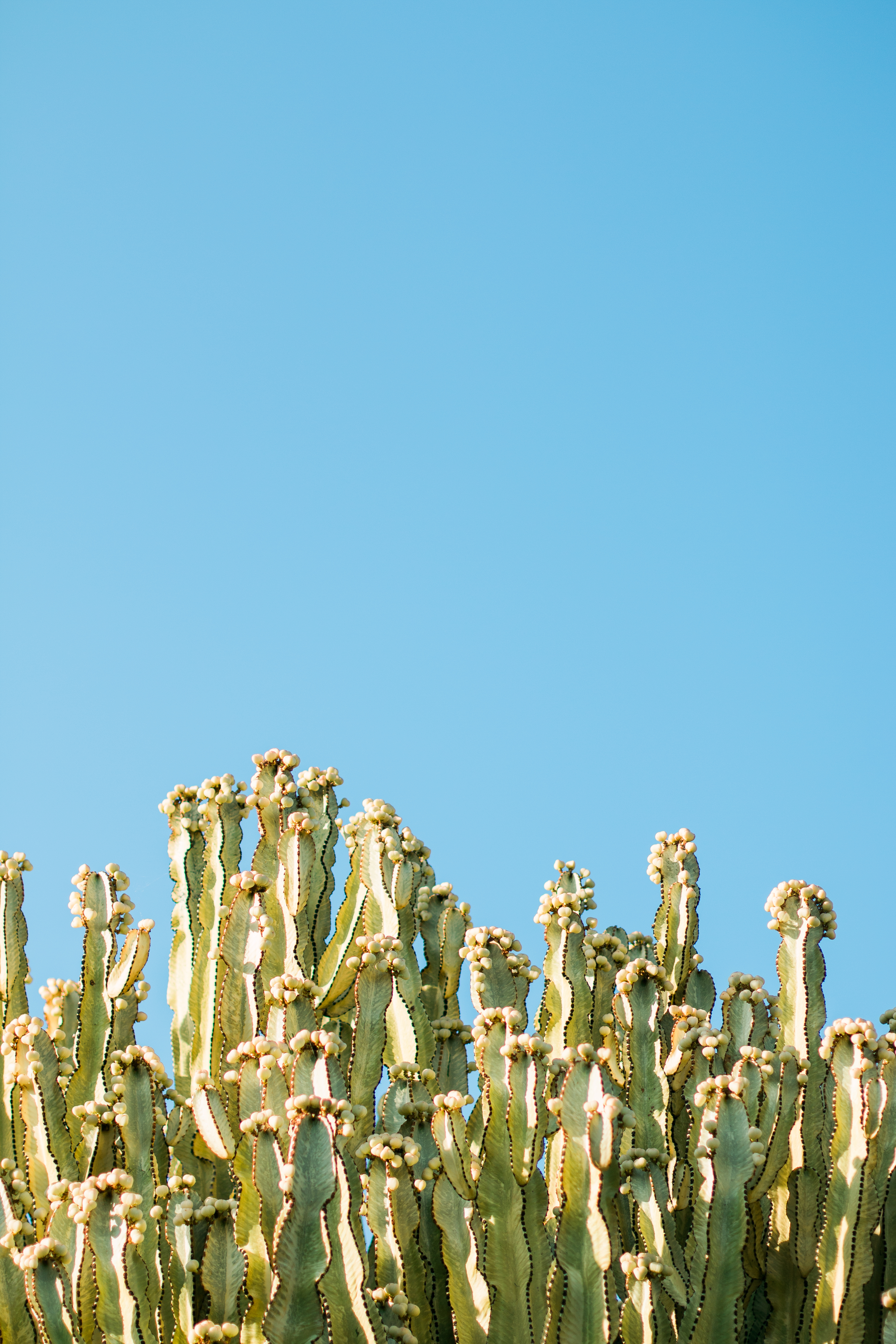 Cactus Plants Under The Starry Sky 183 Free Stock Photo