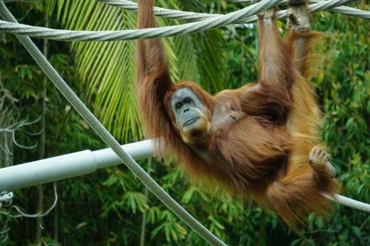 Brown Primate Hanging on Tree