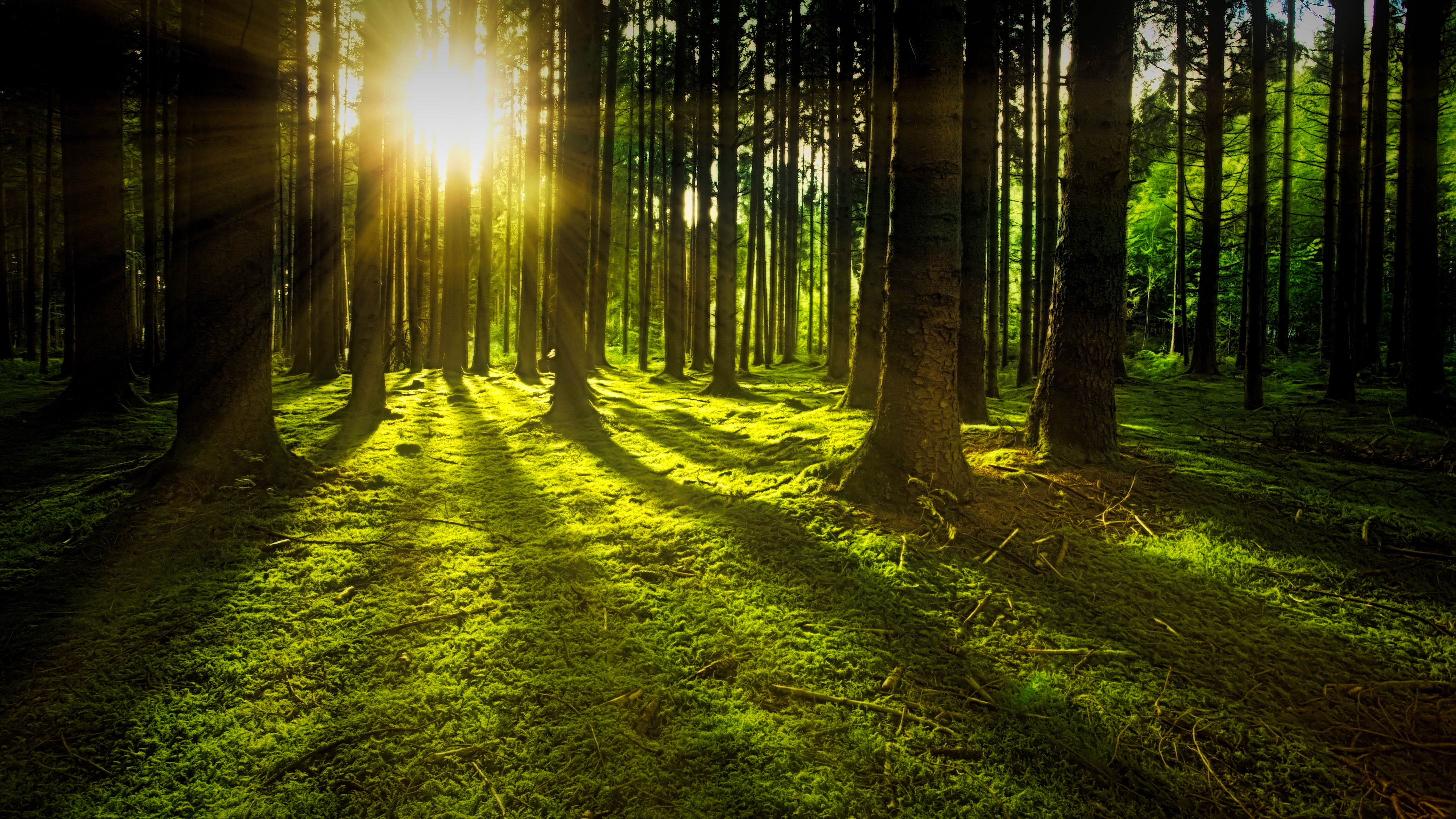 Black Wallpaper 4k Iphone X Ray Of Sunlight Flowing In Trees 183 Free Stock Photo