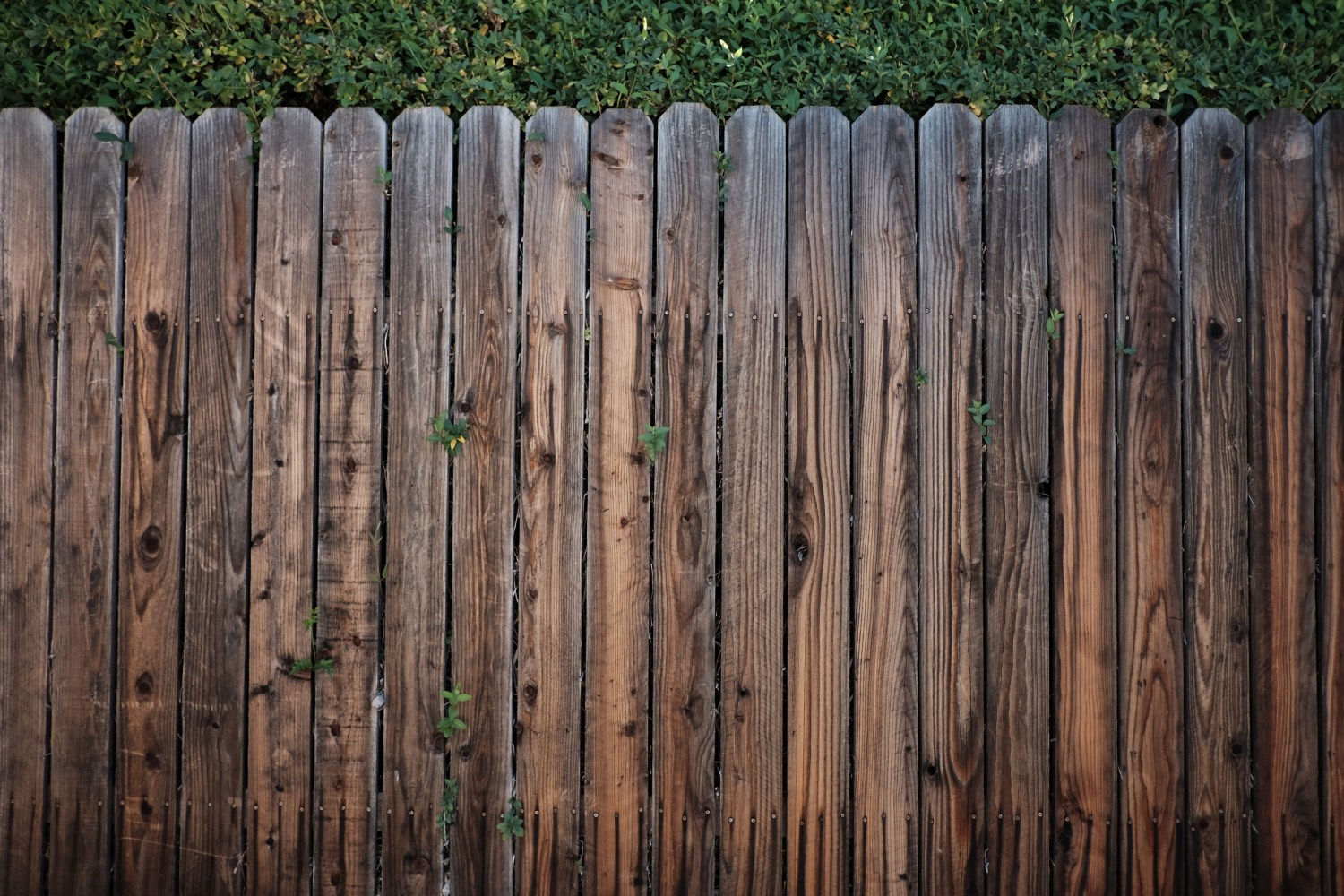1000 Engaging Fence Photos Pexels Free Stock Photos