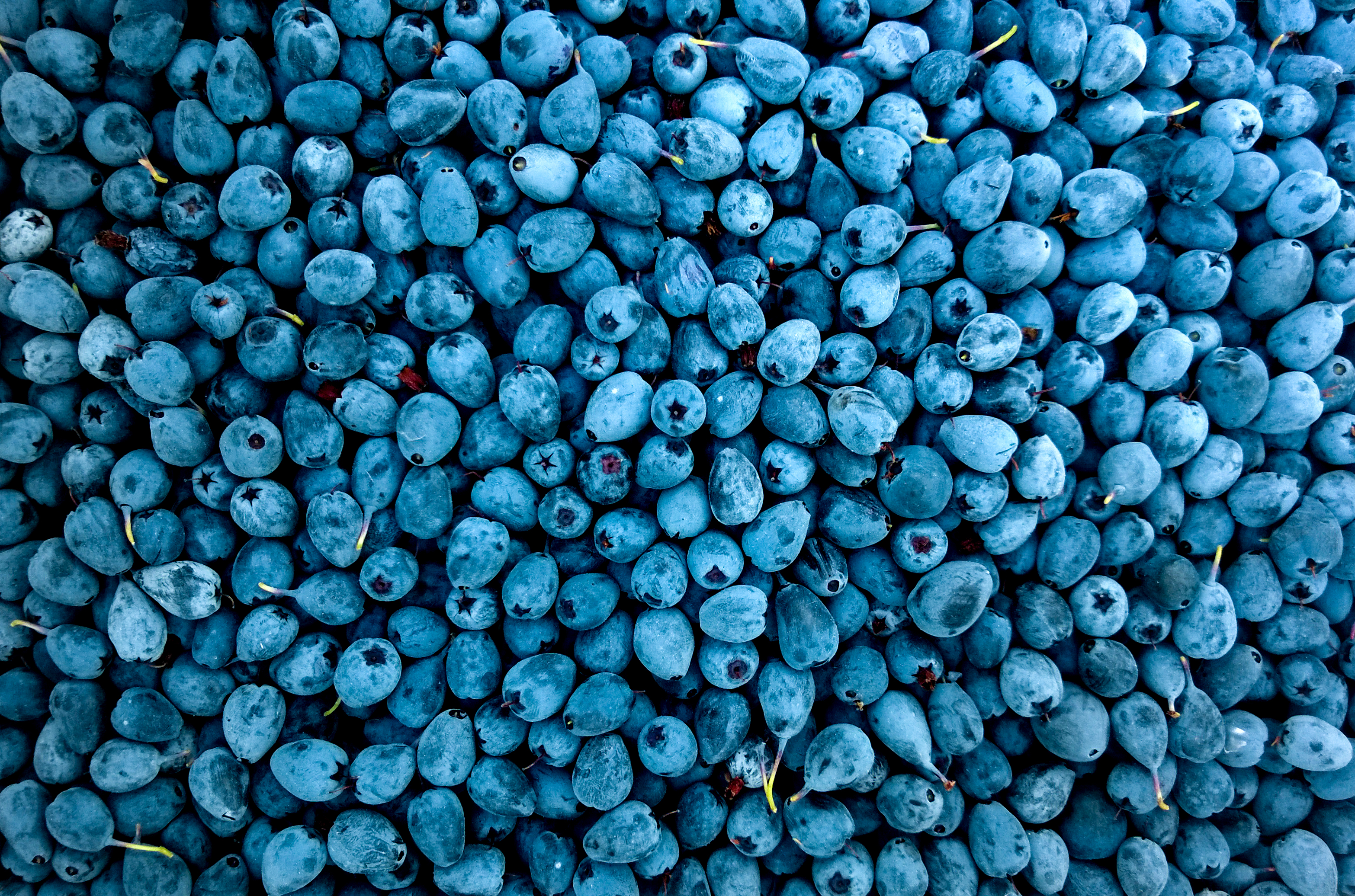 Free Stock Photo Of Berry Blueberry Blur