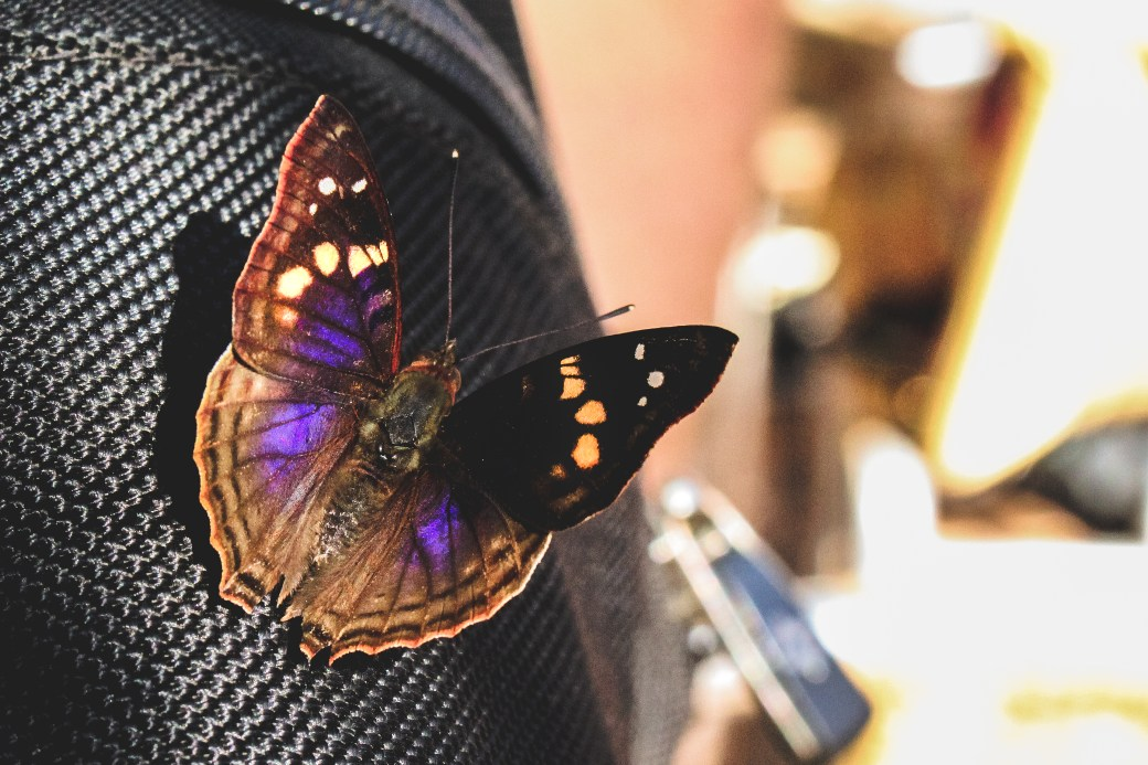 Closeup Photography of Black and Purple Butterfly Perched on Black Textile