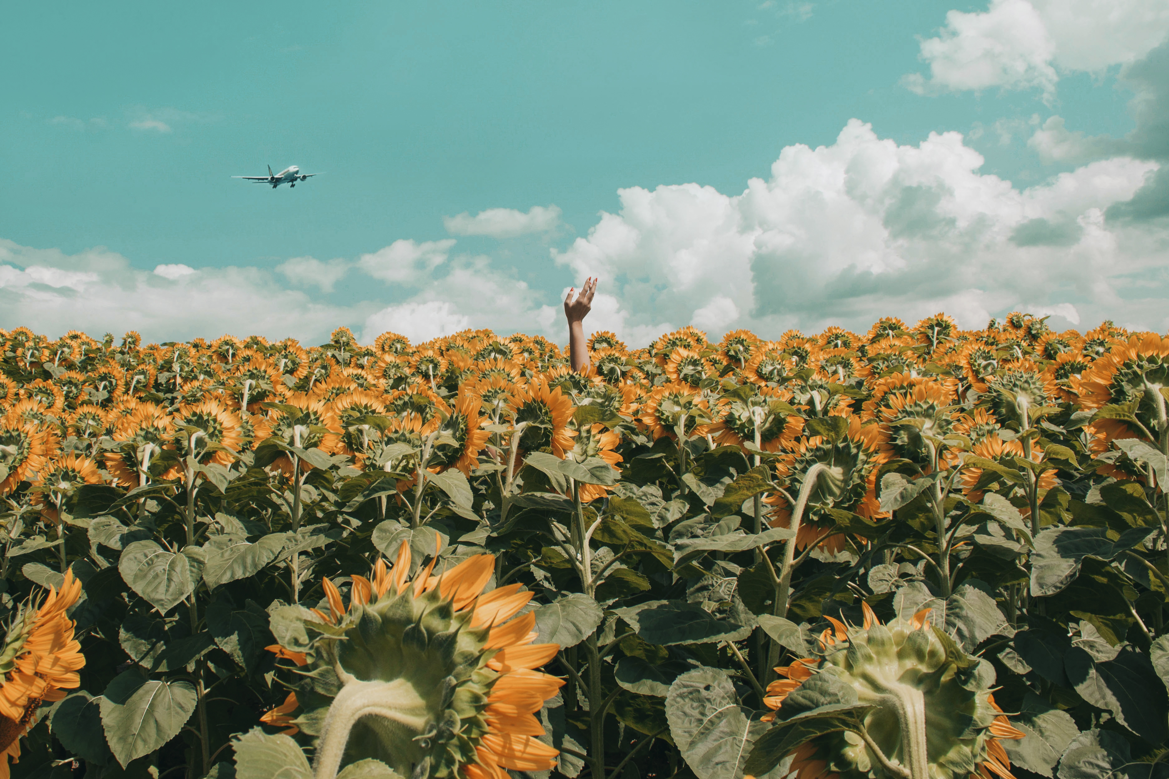 Fall Sunflowers Wallpaper 1000 Amazing Hand Reaching Out Photos 183 Pexels 183 Free
