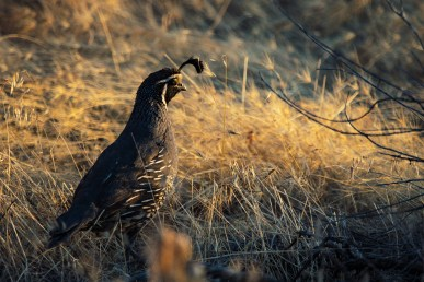 Black Bird on Brown Grass