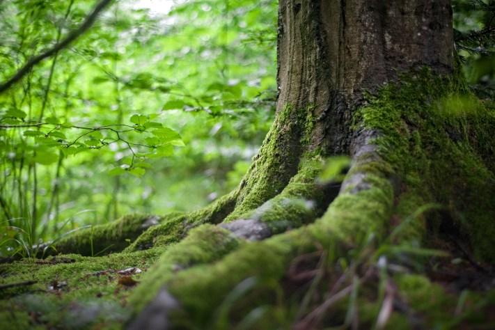 Green Tree Near Green Plants