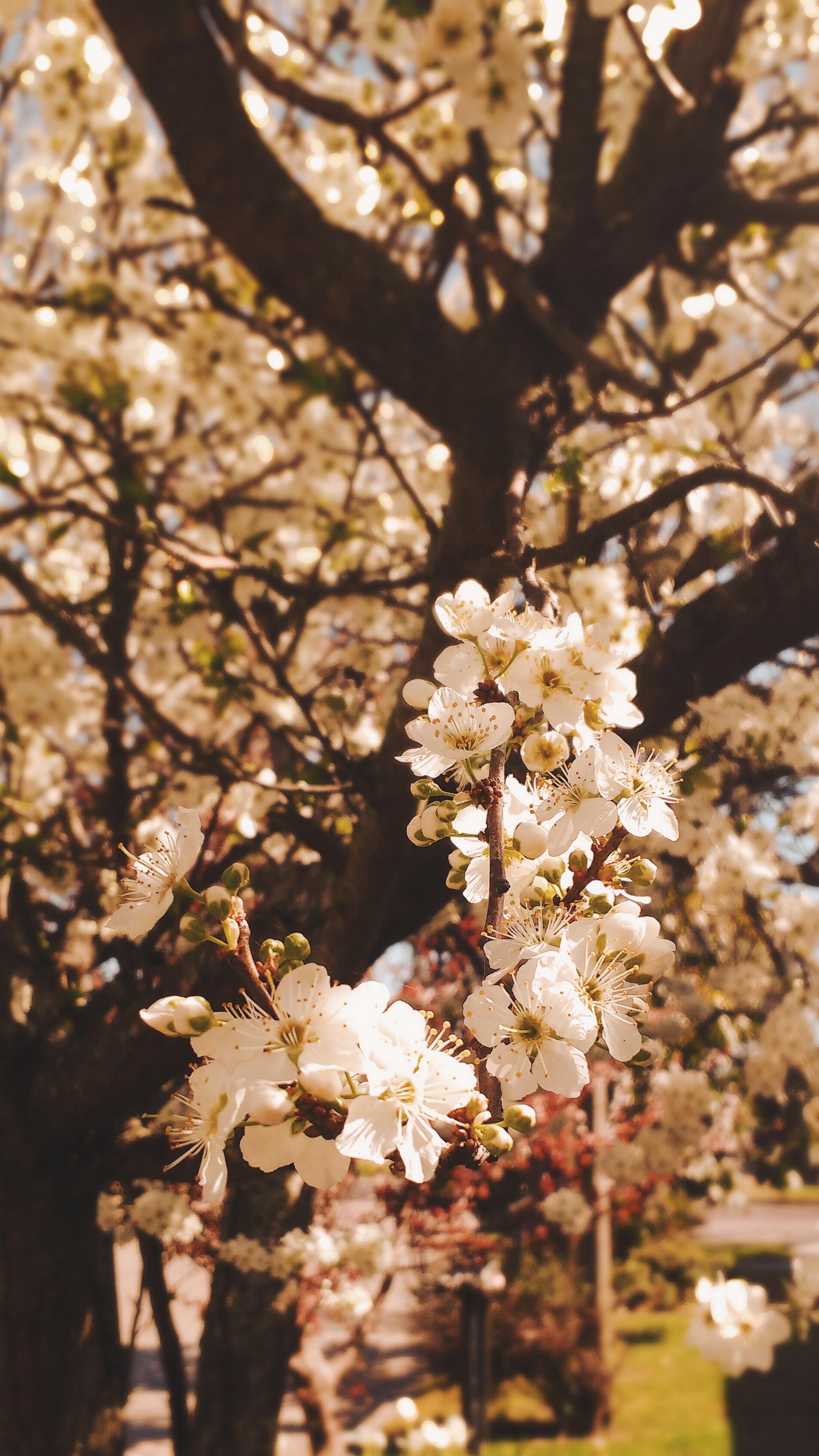hintergrund  Hintergrund Blumen Tumblr