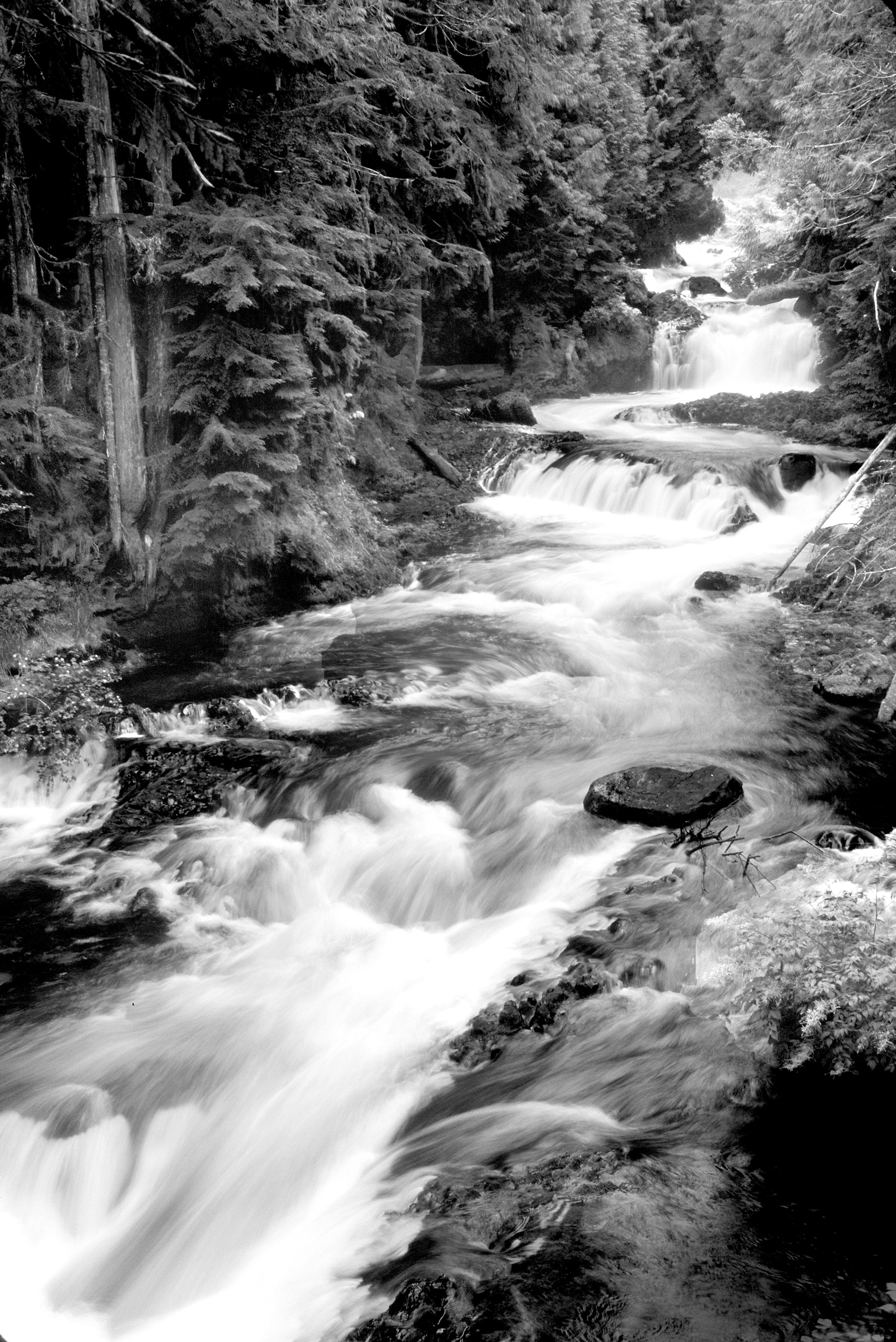 Free Fall Wallpaper For Iphone 6 Grayscale Photography Of Running River Surrounded Forest