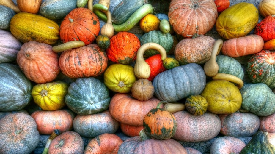 how to cure and store winter squash