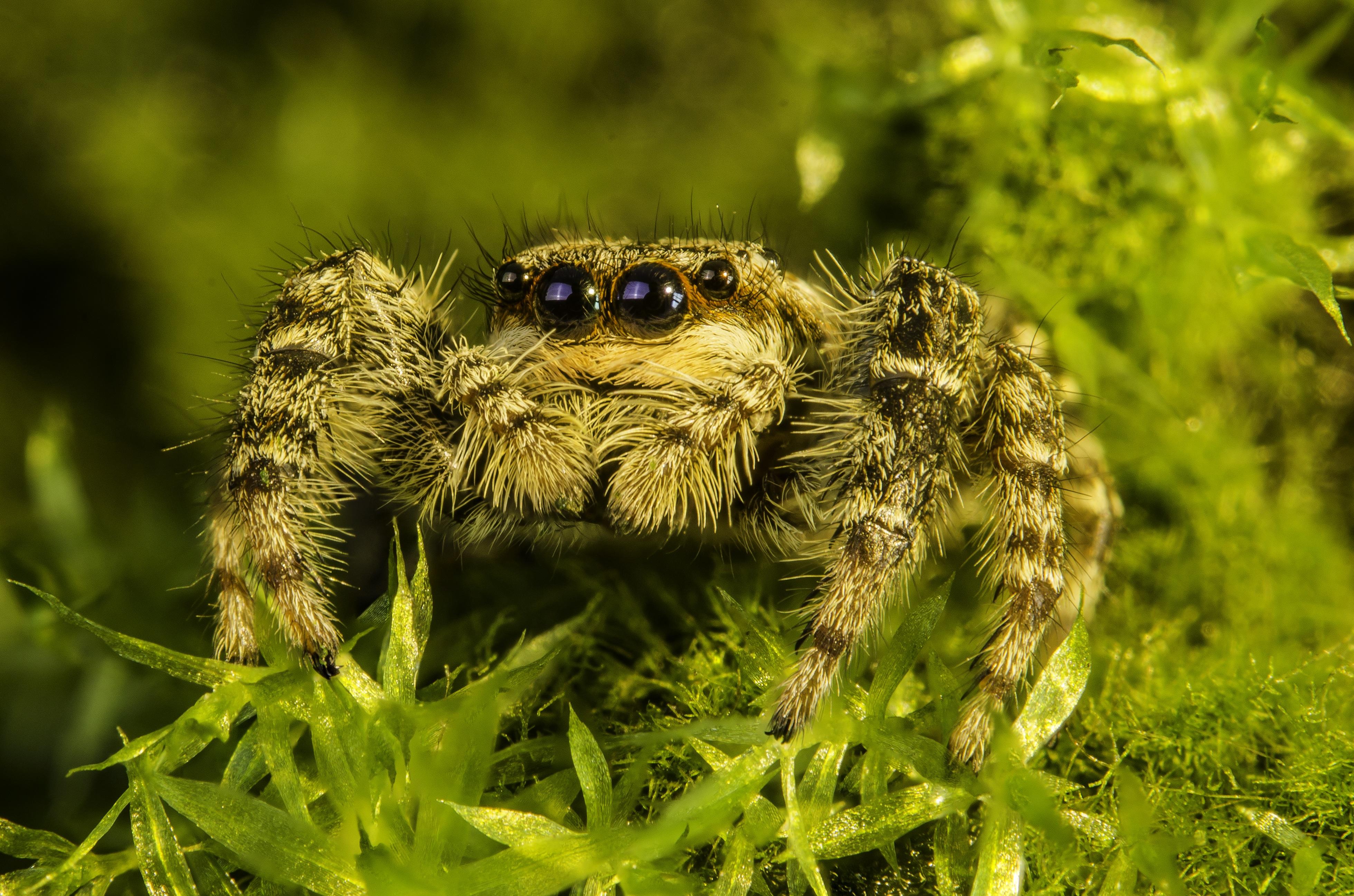 Free Stock Photo Of Arachnid Close Up Macro