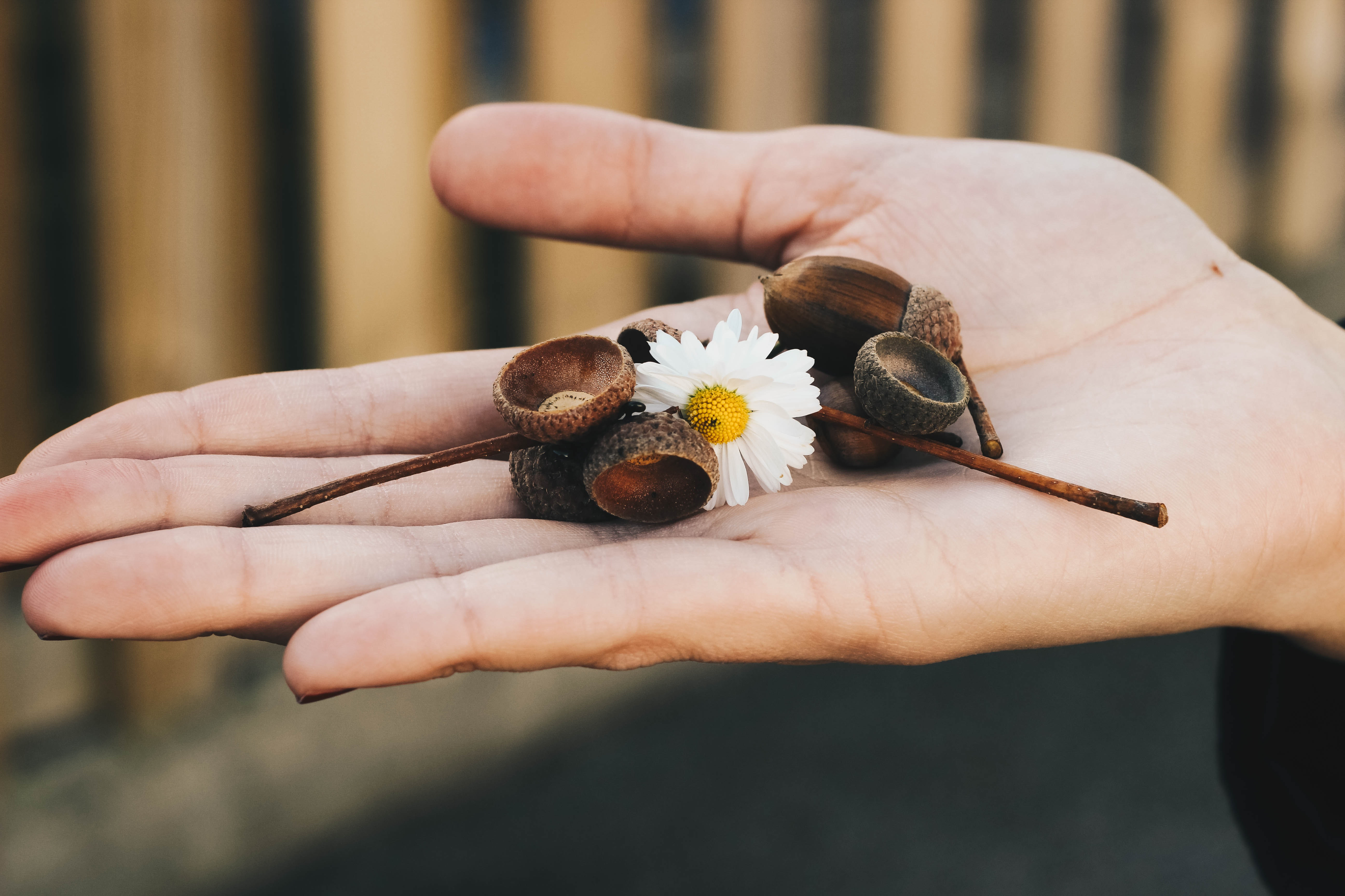 New Free Stock Photo Of Person, Hand, Flower