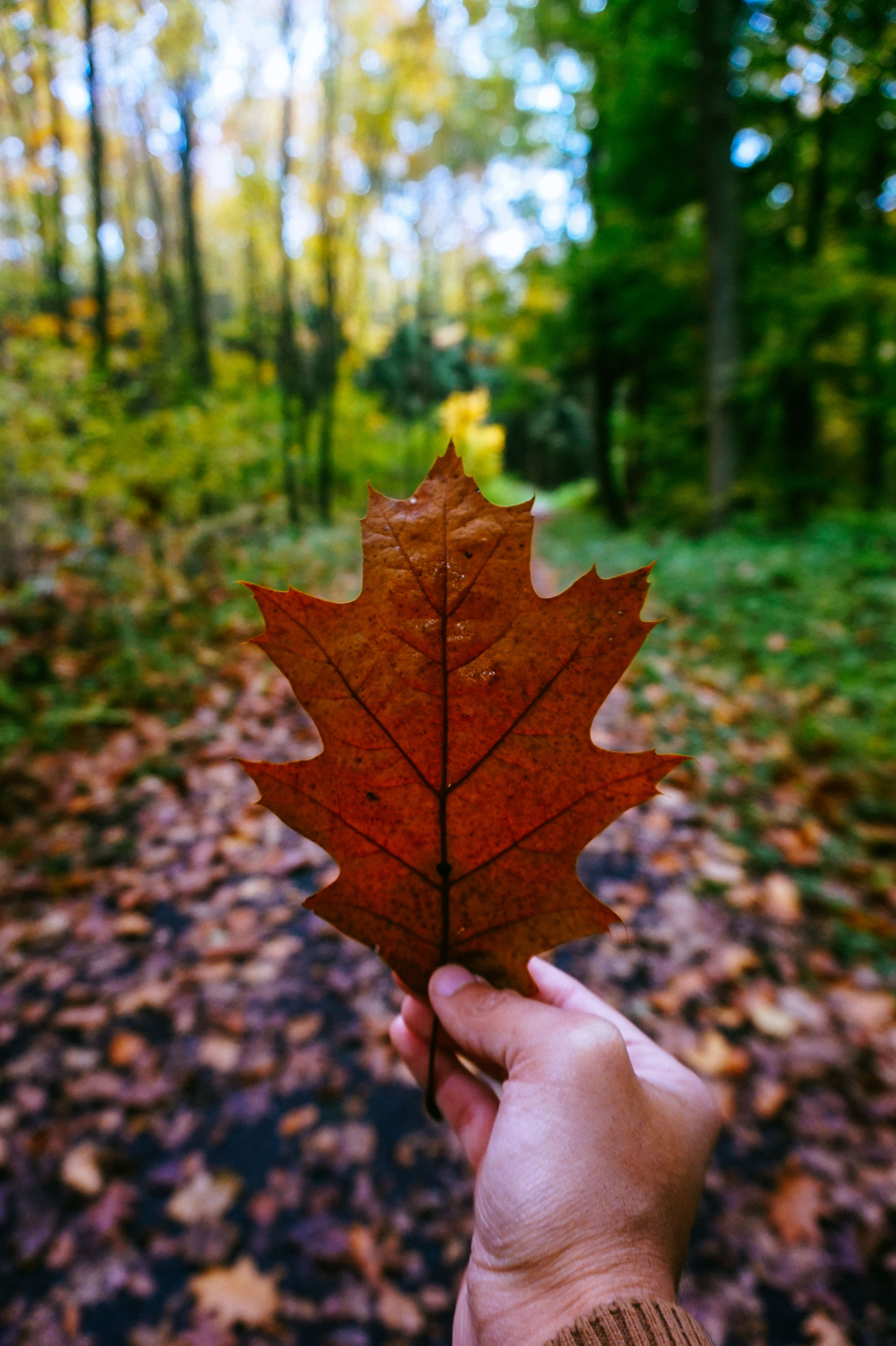 Custom Wallpapers For Iphone X Yellow Leaf 183 Free Stock Photo