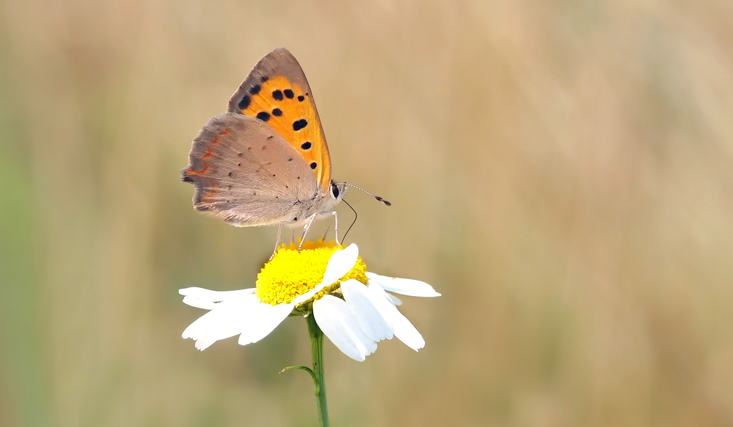 High Definition Animal Wallpapers Free Stock Photo Of Animal Bokeh Butterfly