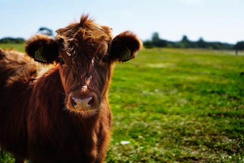 1000 amazing farm animals