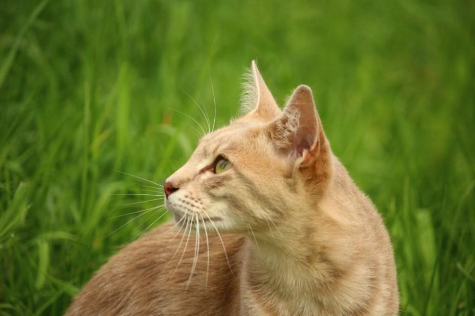 Cat Animal Wallpaper Tan Cat Beside Green Grass During Daytime 183 Free Stock Photo