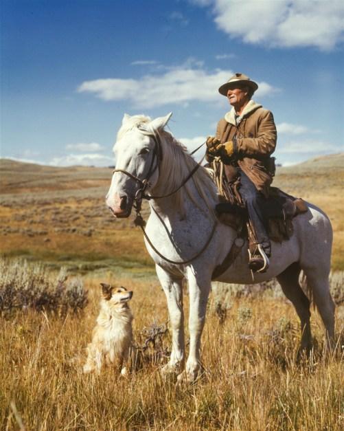 Black Dog Wallpaper Man On White Horse Next To Dog On Grassy Field 183 Free