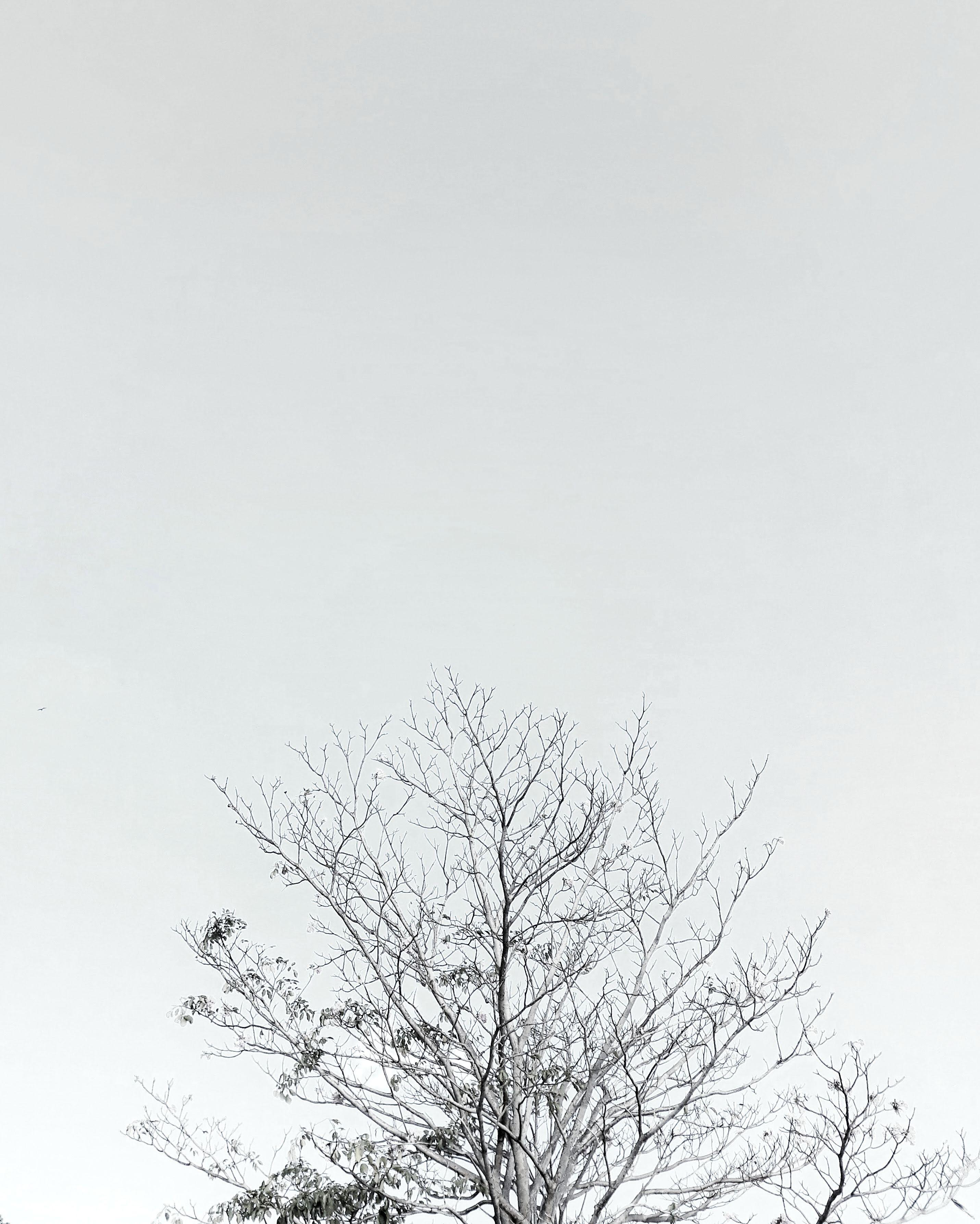 Background Hitam Putih Hd : background, hitam, putih, Stock, Photo, Black, Background,, White,, Minimal