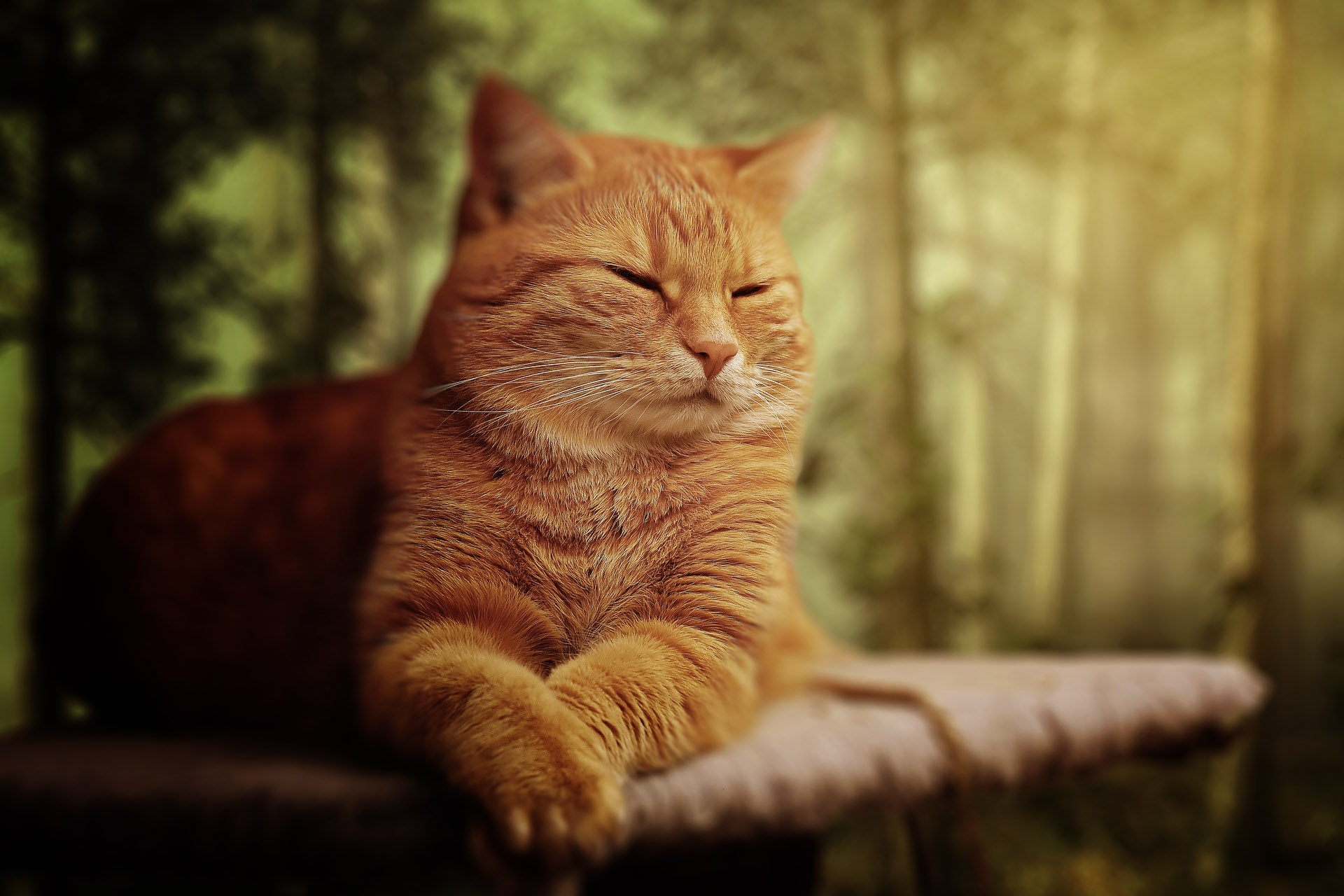 Cute Cat Face Wallpaper Orange Tabby Cat Laying On Brown Sofa 183 Free Stock Photo