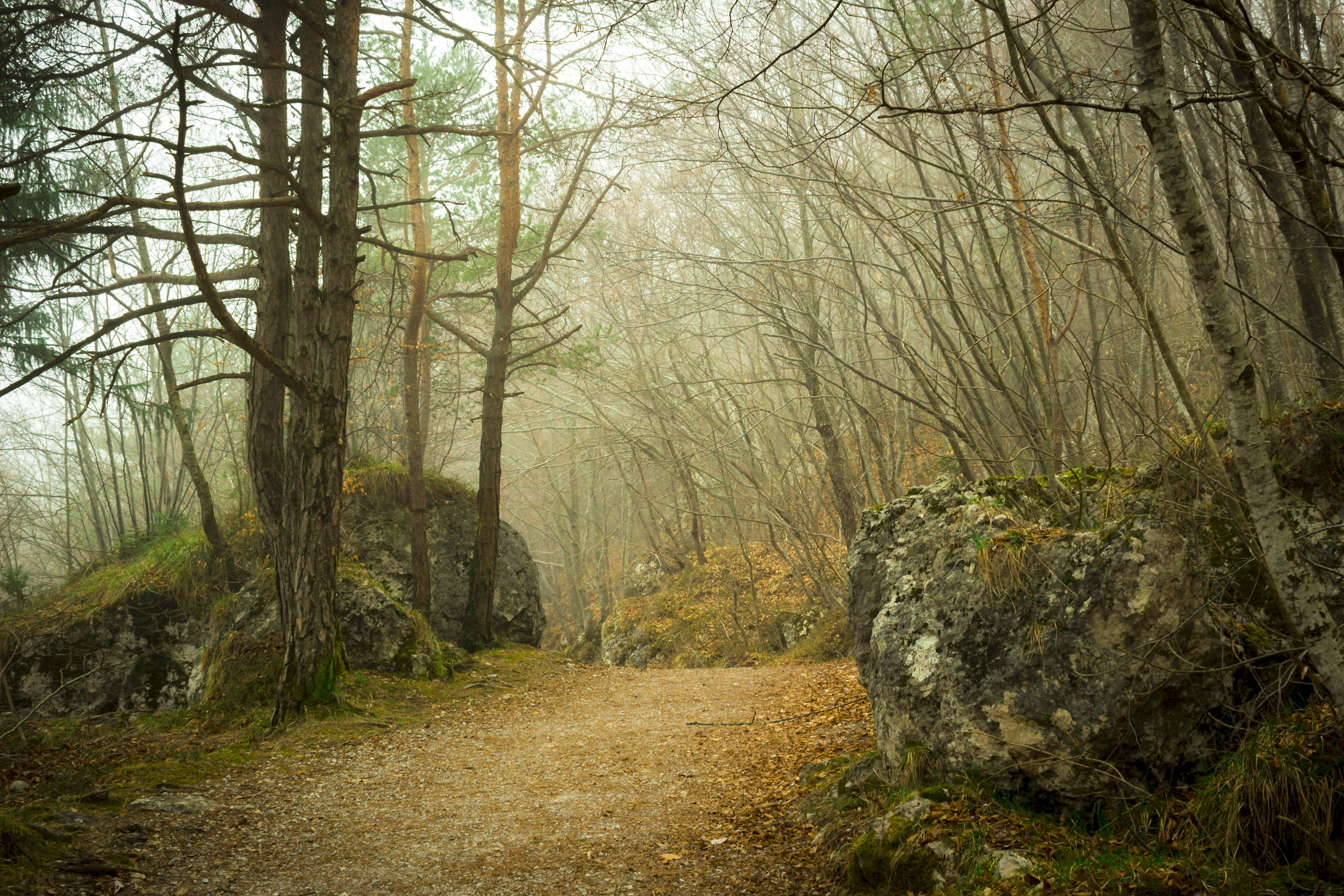 Fall Path Wallpaper Forest During Daytime 183 Free Stock Photo