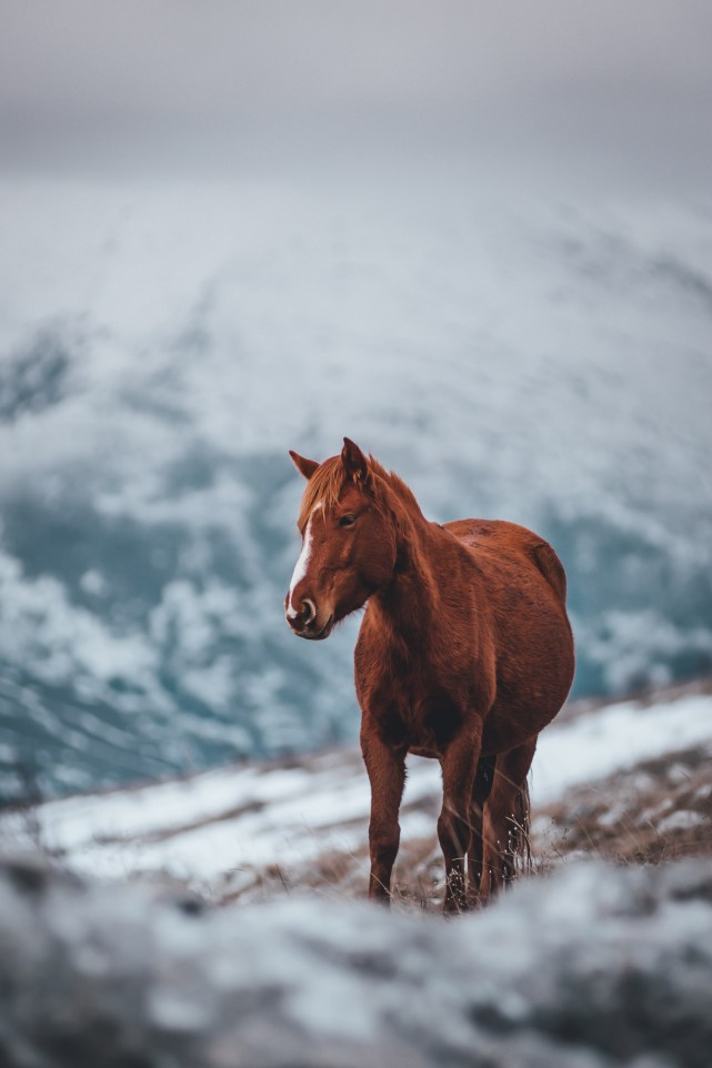 Brown Stallion Horse on Field Covered in Snow