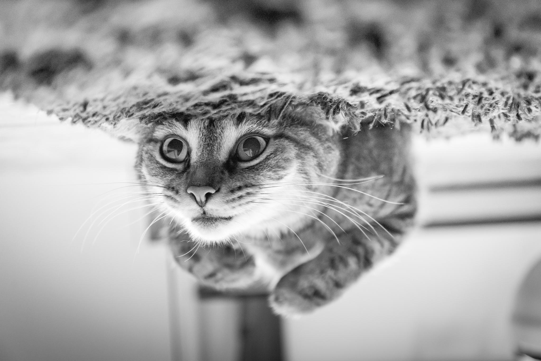 close up of cat