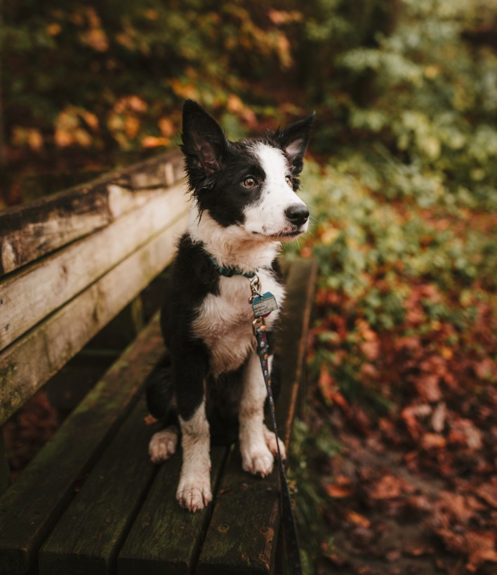 Short-coated White and Black Puppy Sitting on a Bench