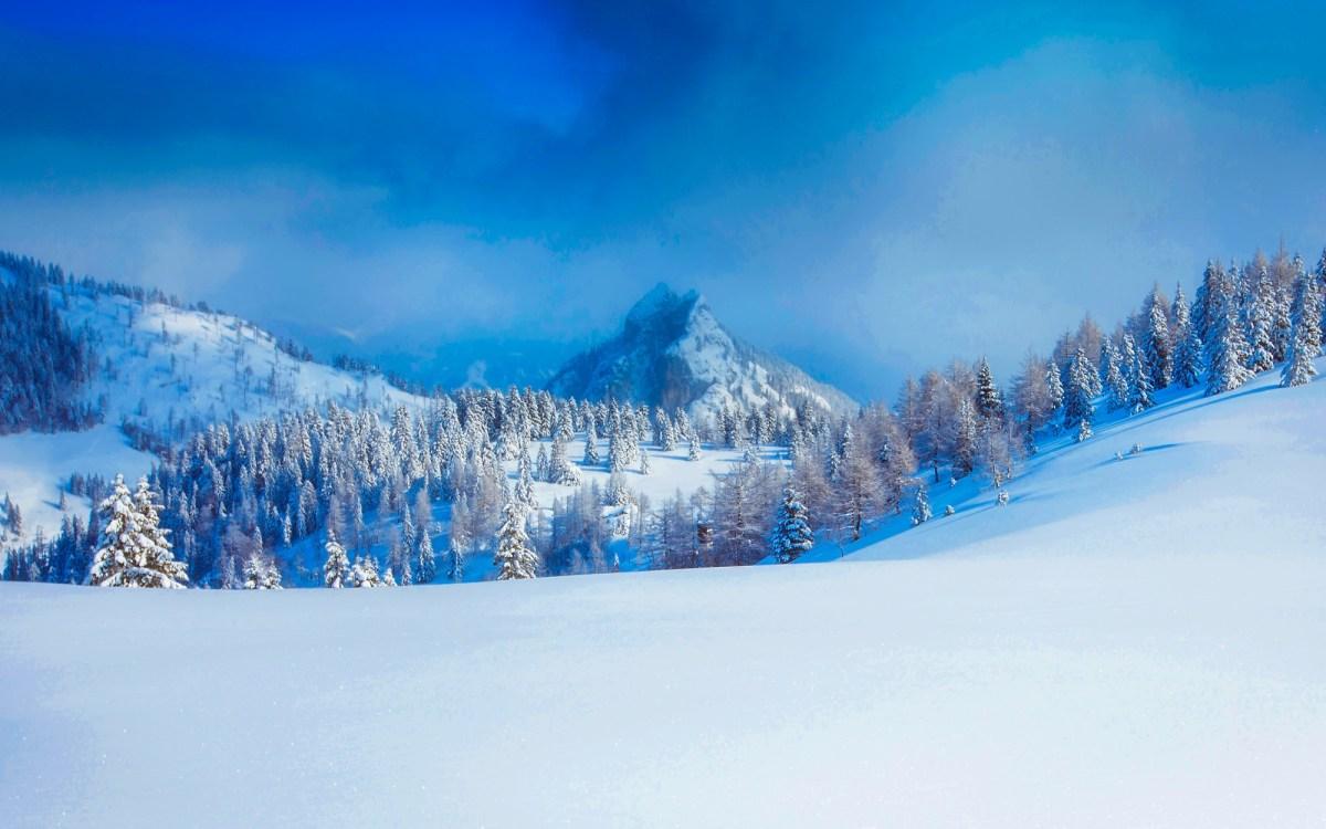 panoramic view of trees snow