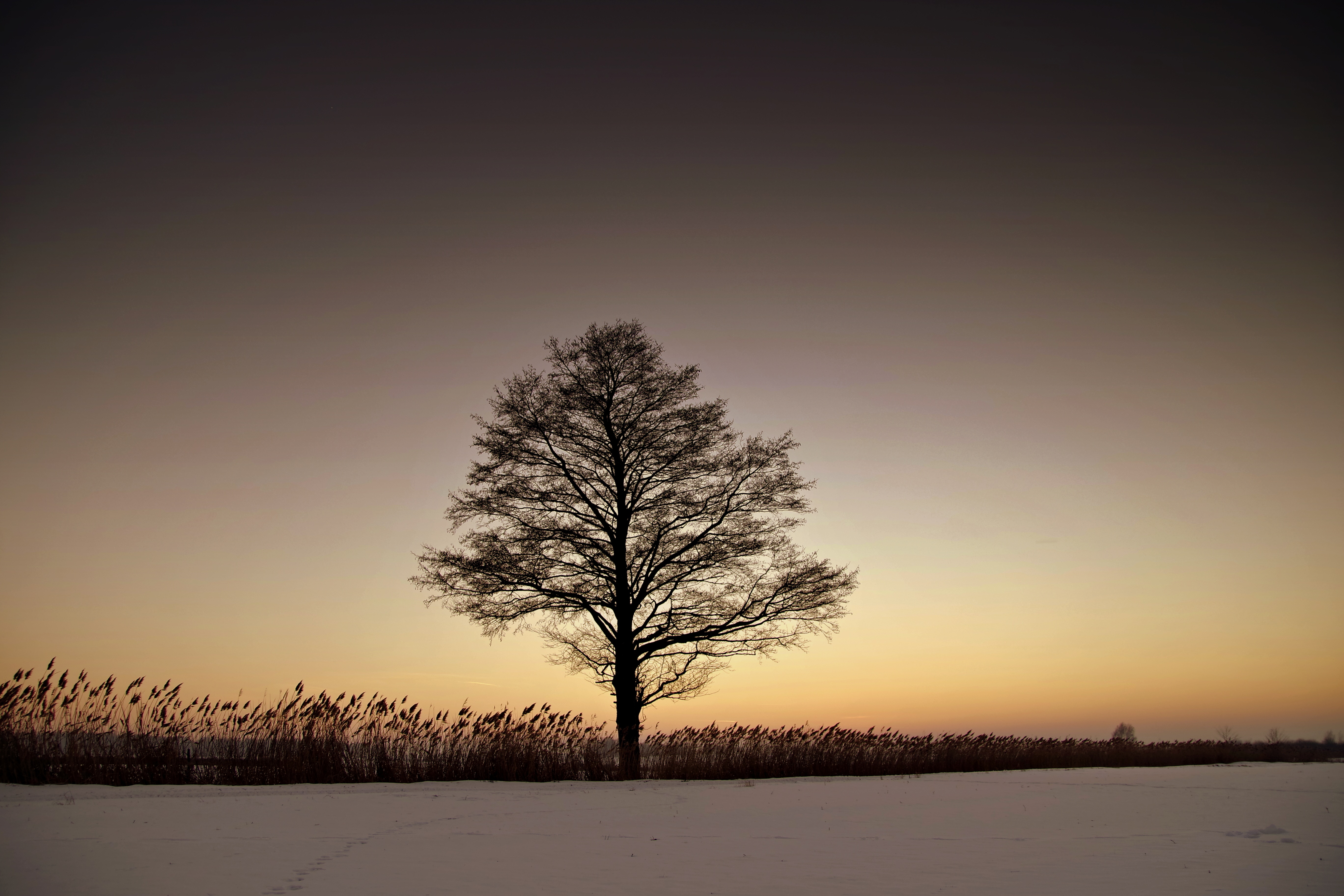 Lonely Wallpaper For Girl Free Stock Photo Of Bough Hill Silhouette