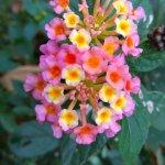 Free Stock Photo Of Beautiful Flower Colourful Kerala