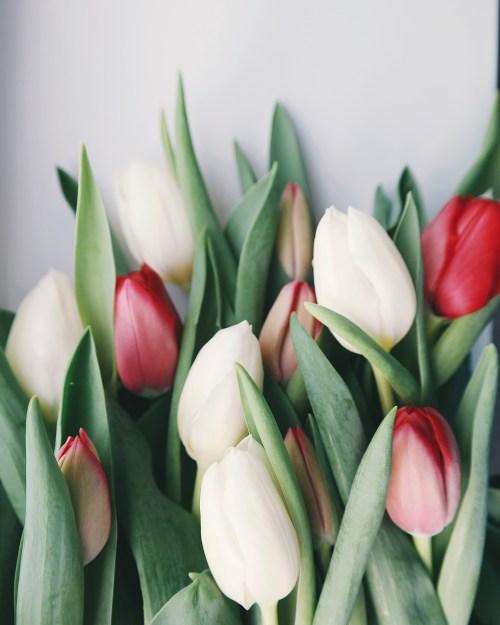 Fotografia de foco seletivo de flores tulipa branca e vermelha