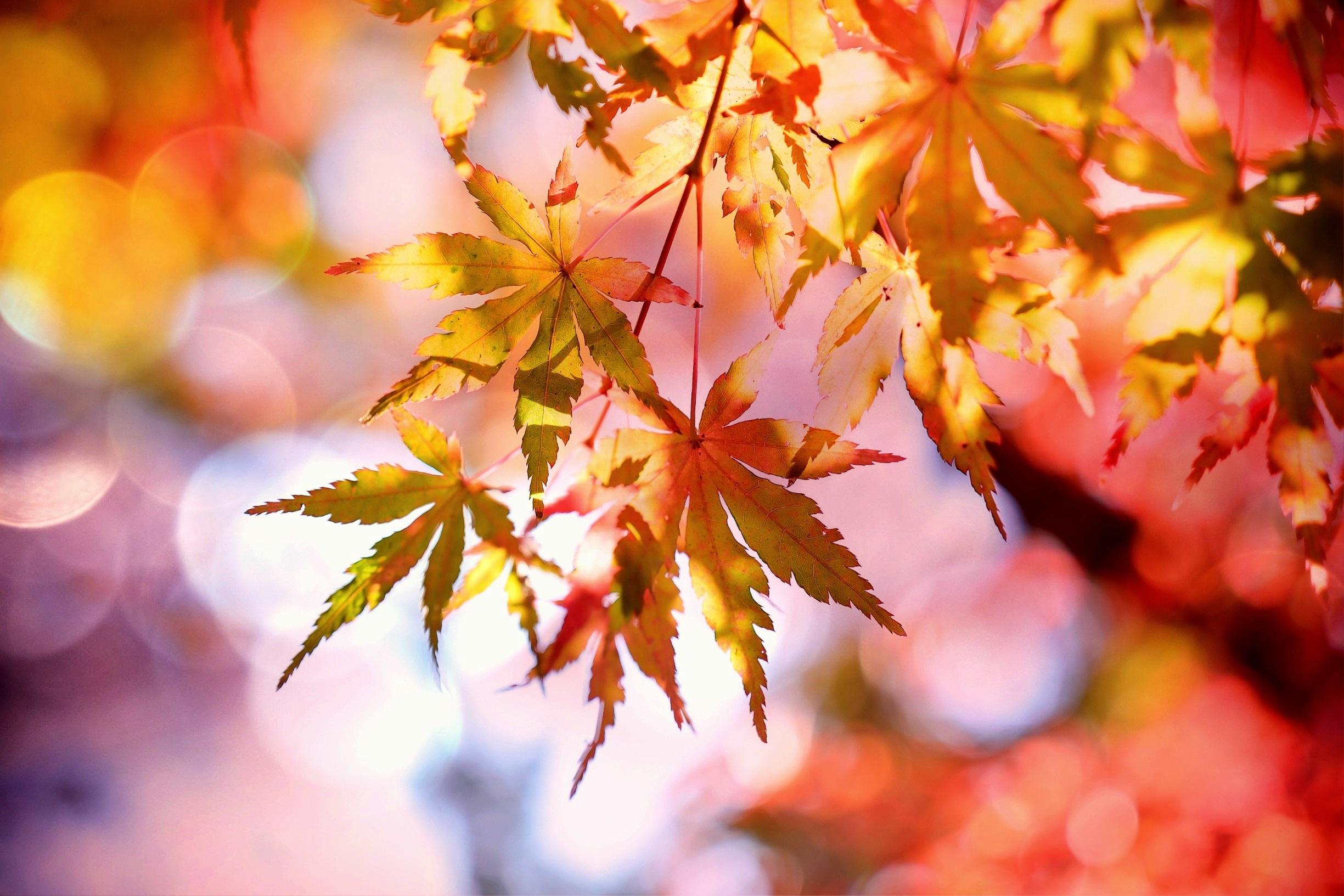 Iphone 6 Wallpaper Fall Leaves 1000 Beautiful Autumn Leaves Photos 183 Pexels 183 Free Stock