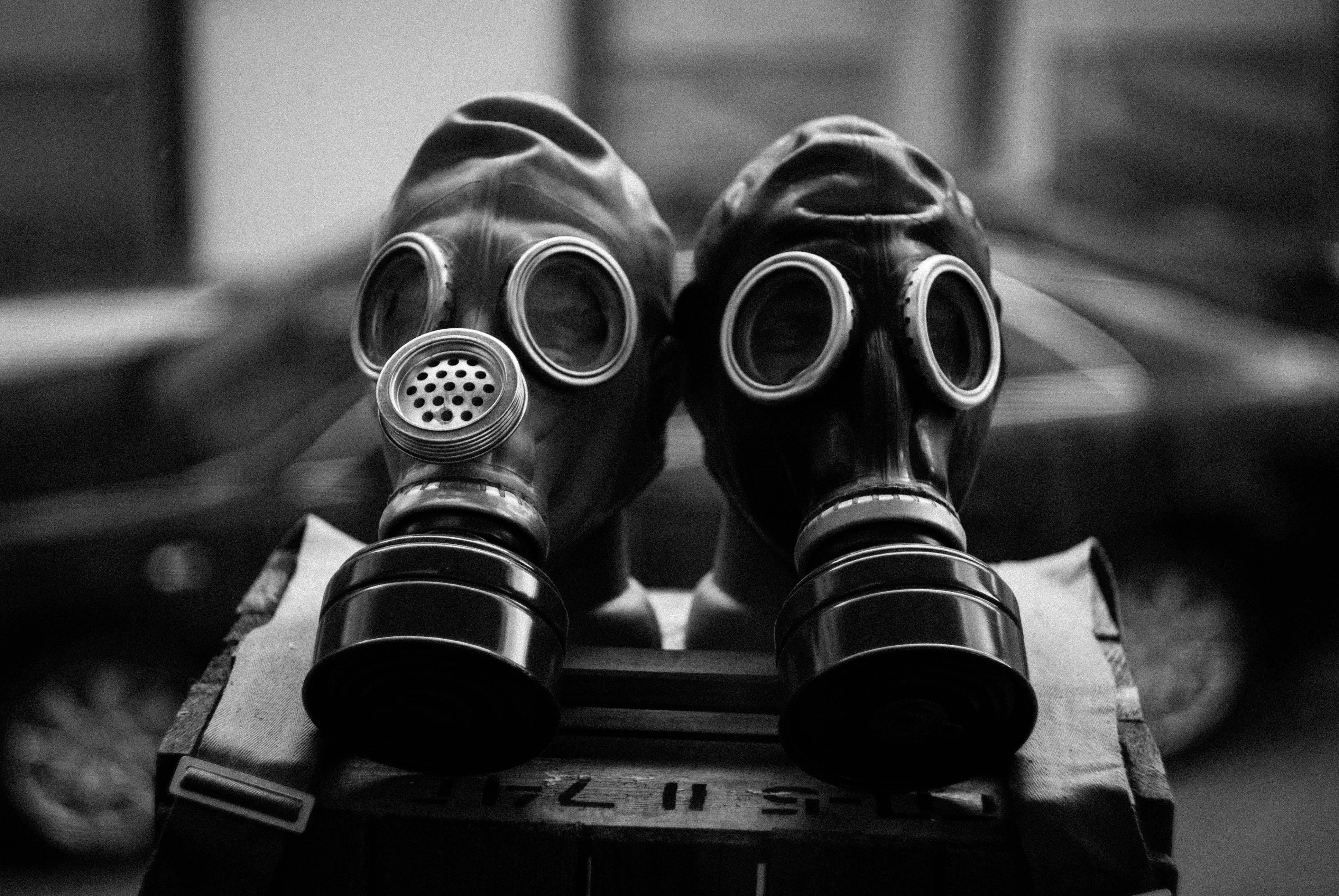 fungos radioativos de chernobyl