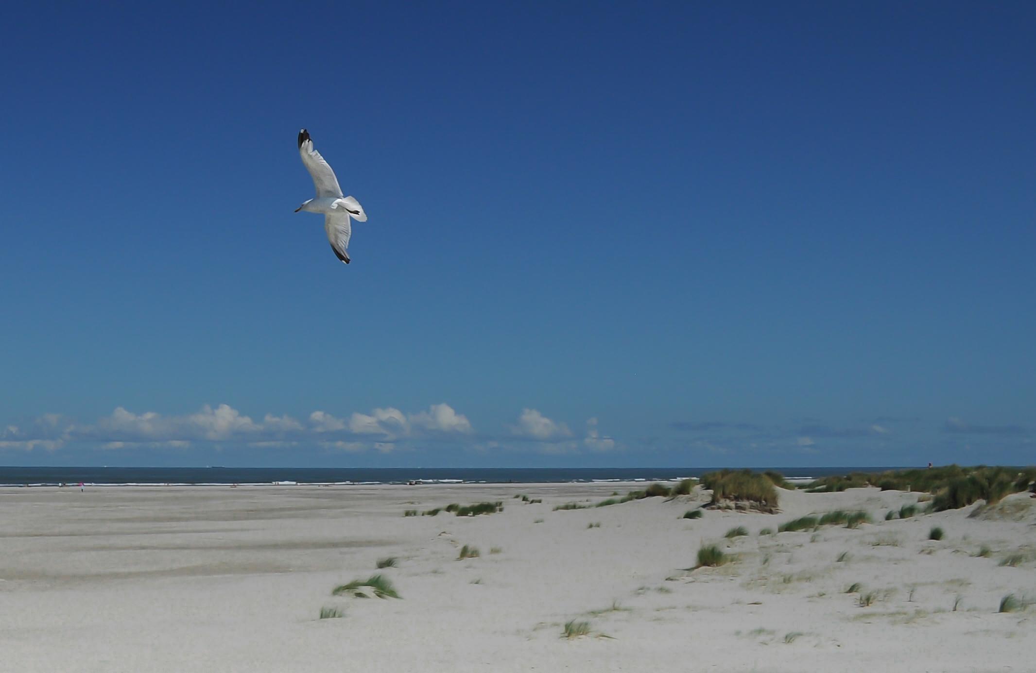 Free Stock Of Beach Bird Flying