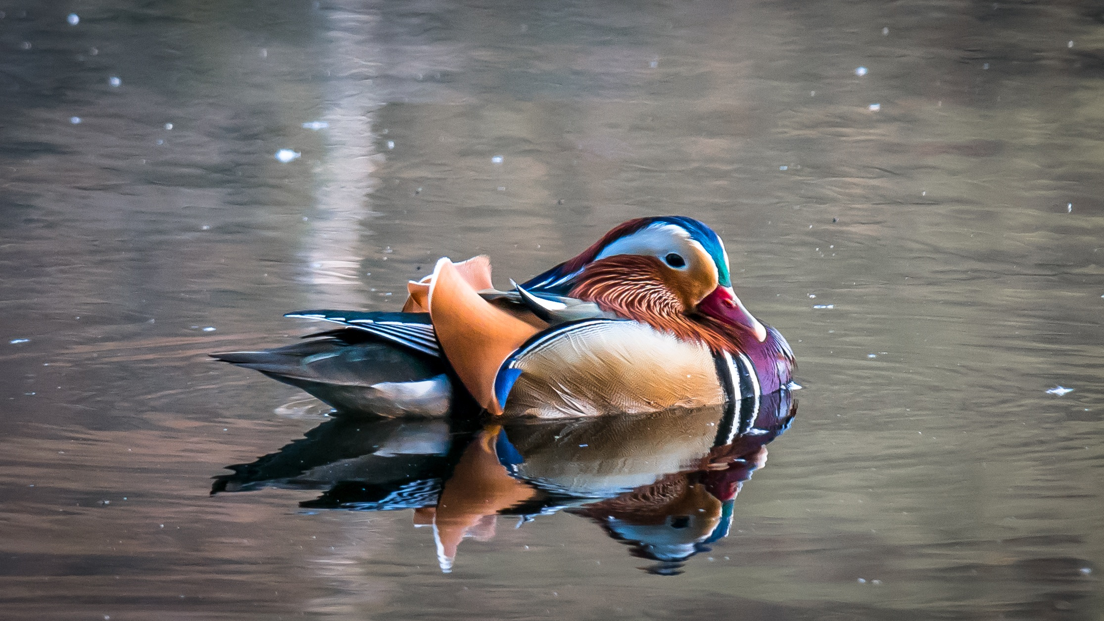 Cute Ducks In Water Wallpaper 1000 Great Reflection Photos 183 Pexels 183 Free Stock Photos