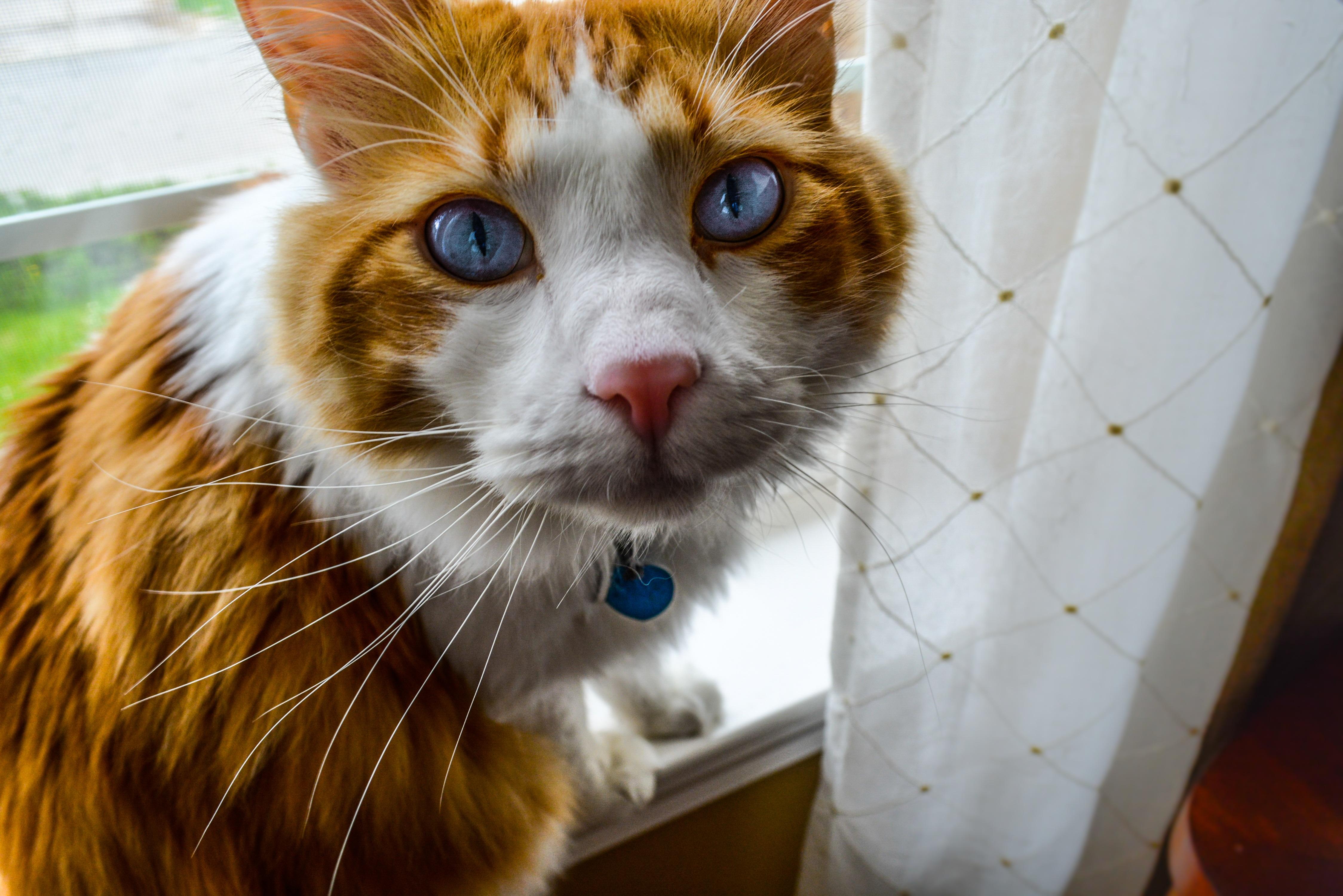 Free stock photo of black cat cat cat eyes
