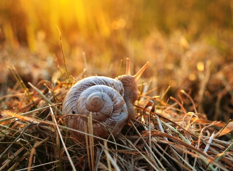 Black and Brown Snail Shell on Beige Textile  Free Stock