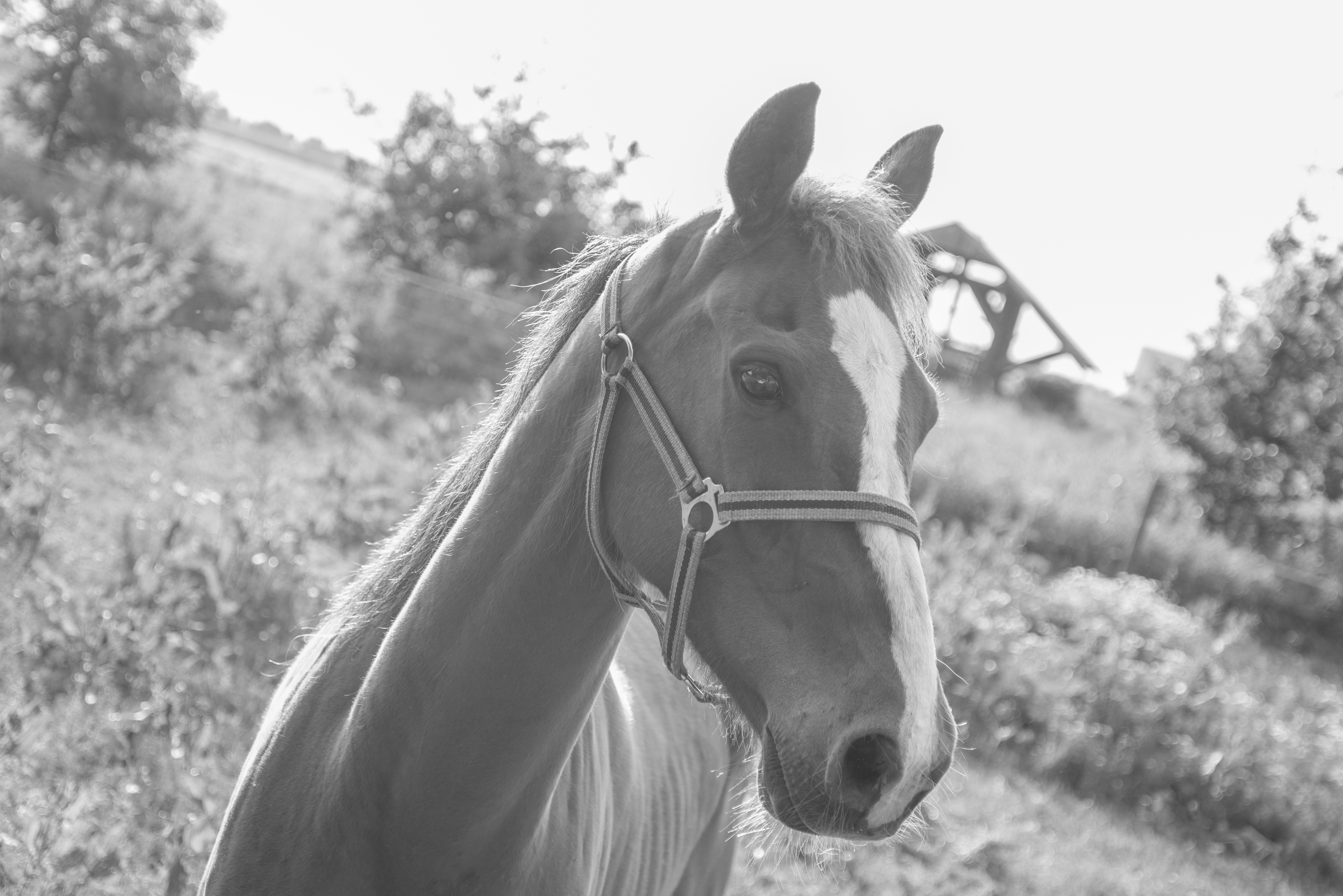 Animal Farm Wallpaper Close Up Photography Of Gray And White Horse 183 Free Stock