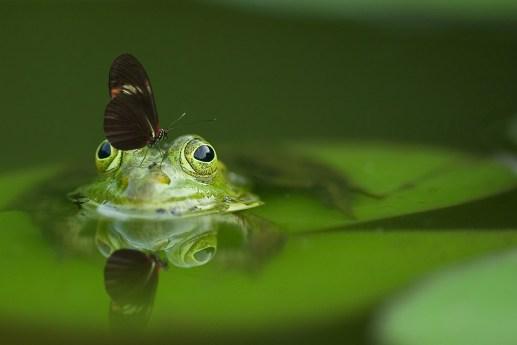 Rejoignez la grenouille