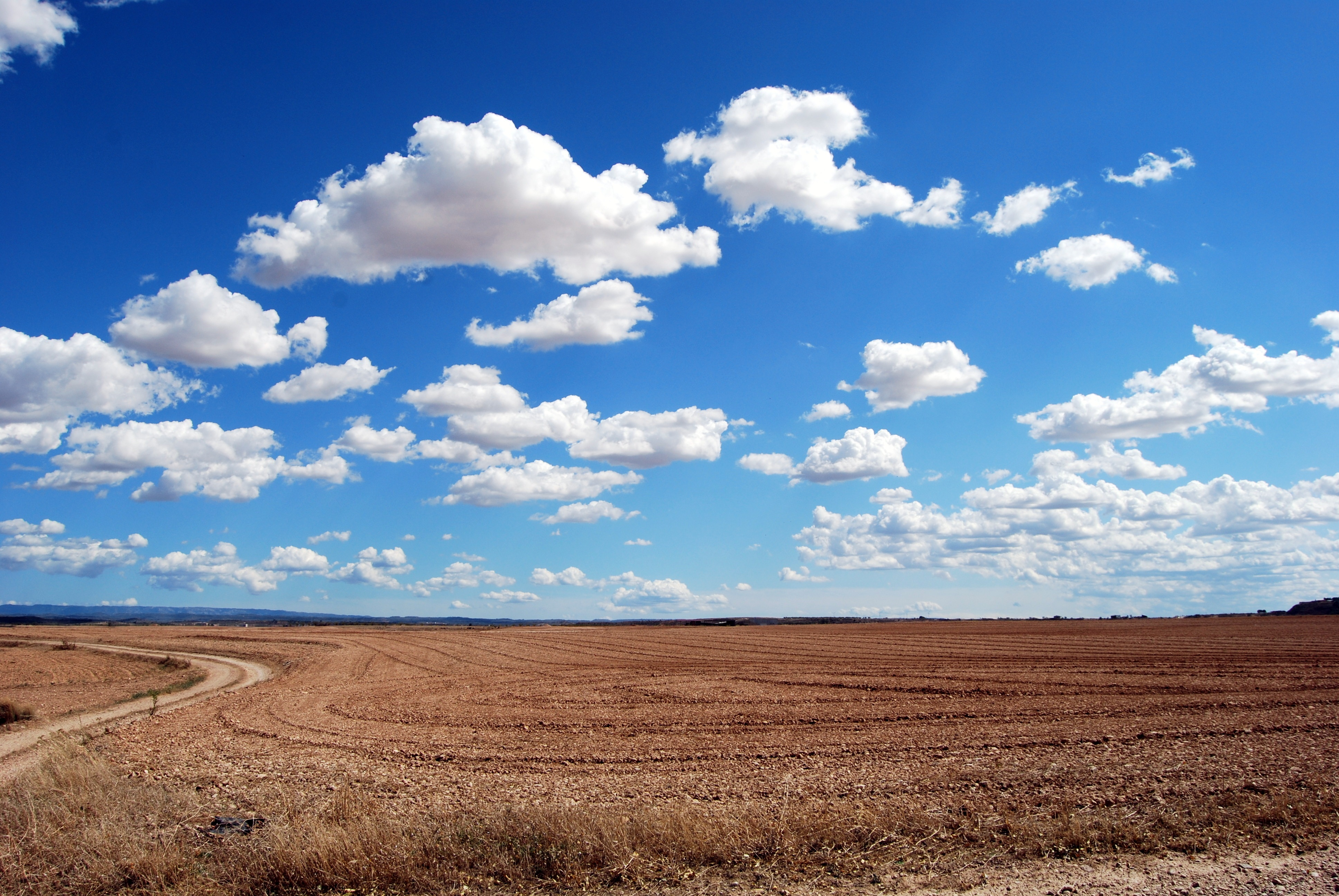 brown field and blue
