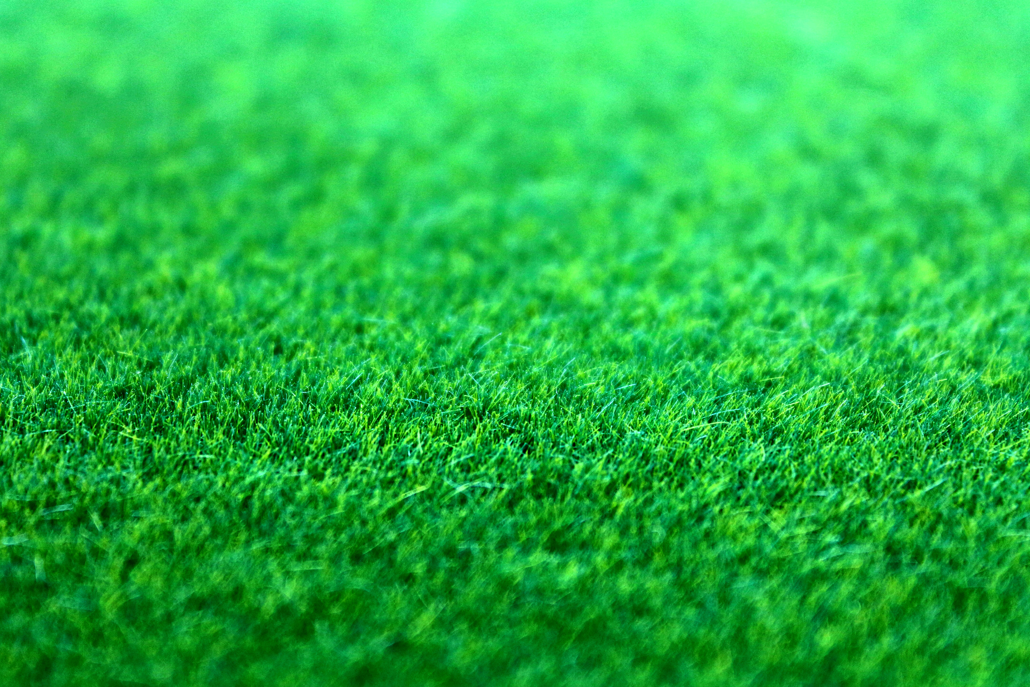 Pitch Black Wallpaper Iphone X Green Grass 183 Free Stock Photo