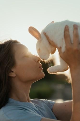Immagine gratuita di albino, alice, animale domestico