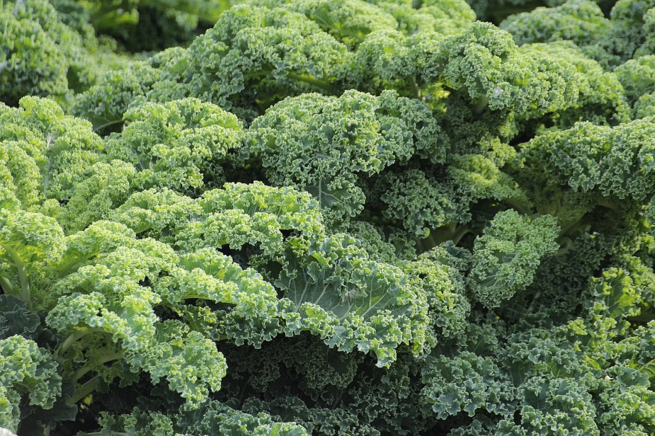 add kale to daily diet