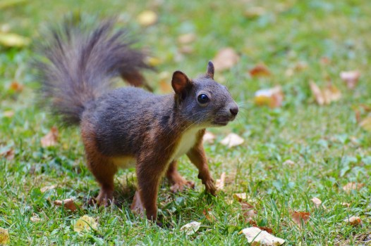 Cute Flowery Wallpaper Brown Squirrel 183 Free Stock Photo