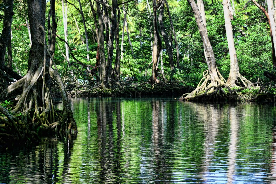 Green Trees on Body of Water