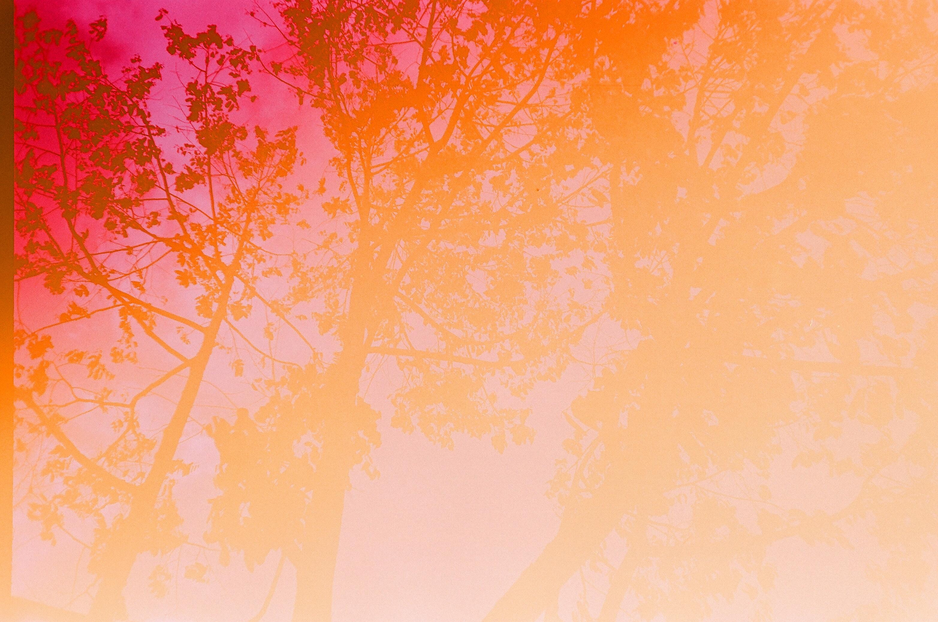 three leafed trees at