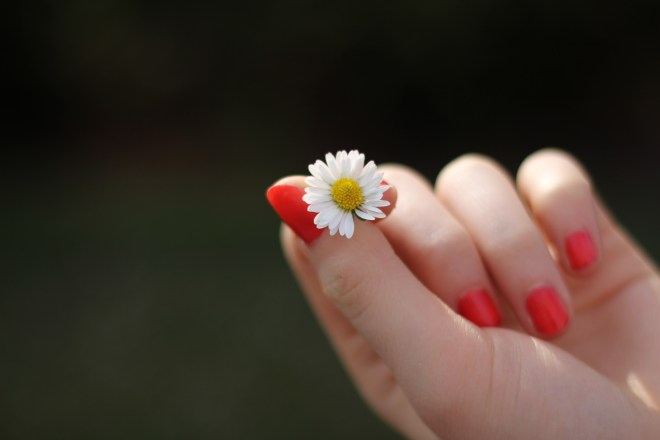 Person With Red Manicure Holding White Petal Flower