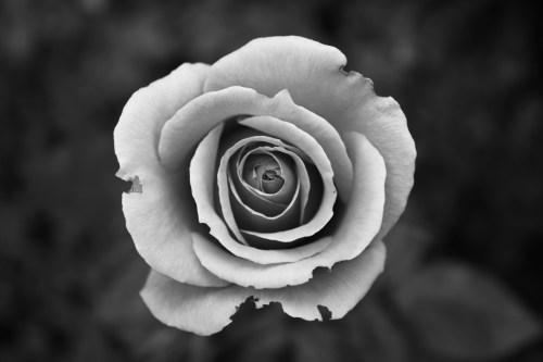 free black and white