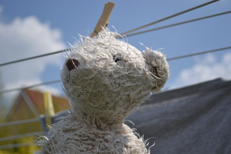 """A sad looking teddy bear is drying alone on a clothesline. He seems to have been oppressed for some time. Or maybe he has given an unlimited amount of hugs, which makes him """"used""""."""